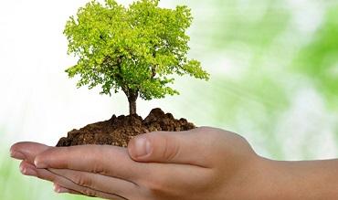 II Plantación de Árboles y Plantas yConstrucción de Hotel de Insectos