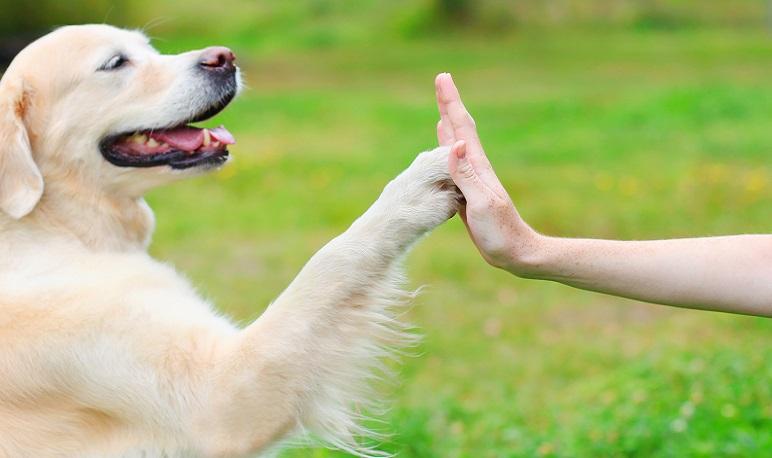 Nuevo curso de adiestramiento canino en Pedrola