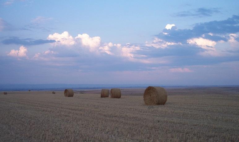 El Ayuntamiento de Pedrola solicita a la DGA mejoras para los agricultores locales