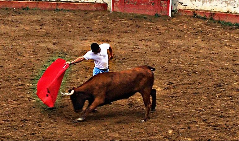 La vaca Pedrolera pasa con nota su primer tentadero en la Finca de Arriazu